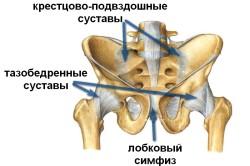 Схема тазобедренного сустава