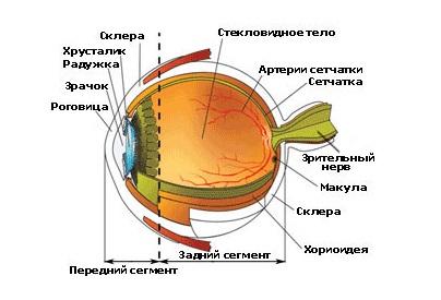 Исправление дефектов зрения дальнозоркость и близорукость