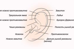 Анатомическое строение наружнего уха